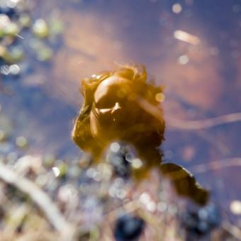 """Veidrodis gamtoje (pelkėje) (nuotrauka iš ciklo """"Mano moterys"""", paroda """"Kablyje"""")"""