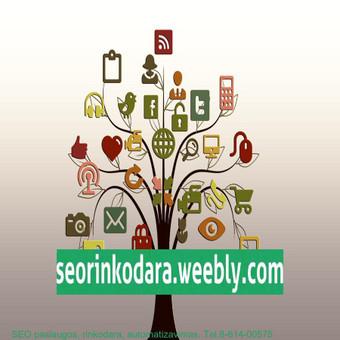 Internetinio verslo ir pardavimų konsultantas, SEO rinkodara / Mindaugas Vaitkus / Darbų pavyzdys ID 456011