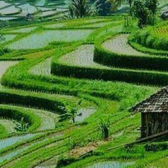 INDONEZIJA-BALI / Remigijus / Darbų pavyzdys ID 462551