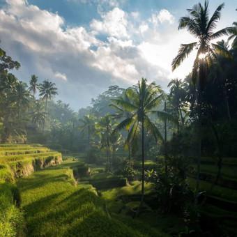 INDONEZIJA-BALI / Remigijus / Darbų pavyzdys ID 462553