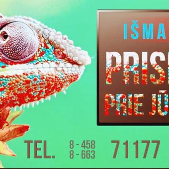Grafikos dizaino paslaugos / Reda Dubinskaitė / Darbų pavyzdys ID 464099