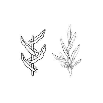 """Iliustruotas logotipai. dviejų rūšiu. abu piešti rankomis. vektorizuoti. Brandas - """"Forests and meadows"""""""