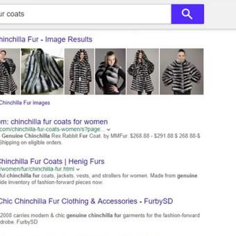"""Tik indeksavus po pusės dienos Bing Yahoo AOL rodo furbysd.com  pagal raktinius žodžius """"genuine chinchilla coat, genuine chinchilla vest, genuine chinchilla fur, genuine chinchilla"""". TOP 10, o p ..."""