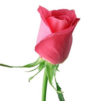 Gėlių pristatymas Visoje Lietuvoje / Gėlių Fėja / Darbų pavyzdys ID 496223