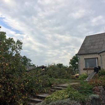 Dviejų liepų ( 4 ir 3 kamienų) kirtimas šalia gyvenamojo namo. Medžiai nupjauti ir palikti pagal užsakovo pageidavimą.