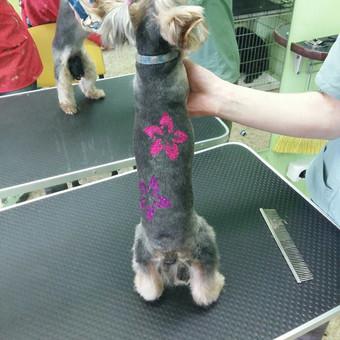 Šuniukų kirpimas / Katerina / Darbų pavyzdys ID 566837