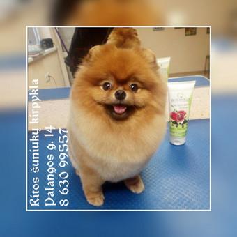 Ritos šuniukų kirpykla / Rita / Darbų pavyzdys ID 567033