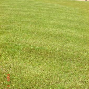 Aplinkos tvarkymas, apželdinimas, aeravimas, vejos įrengimas / Dainius Rėklaitis / Darbų pavyzdys ID 574803