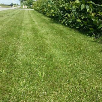 Aplinkos tvarkymas, apželdinimas, aeravimas, vejos įrengimas / Dainius Rėklaitis / Darbų pavyzdys ID 574807