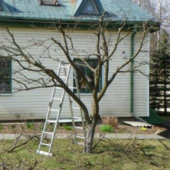 Aplinkos tvarkymas, apželdinimas, aeravimas, vejos įrengimas / Dainius Rėklaitis / Darbų pavyzdys ID 585273