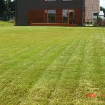 Aplinkos tvarkymas, apželdinimas, aeravimas, vejos įrengimas / Dainius Rėklaitis / Darbų pavyzdys ID 585279