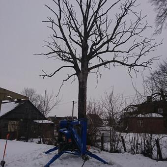 Nudžiuvusio uosio kirtimas su alkūniniu keltuvu. Kliento pageidavimu visas medis supjautas kaladėmis.