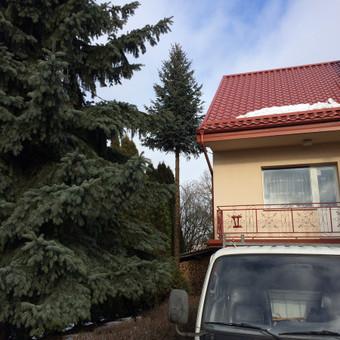 Eglės kirtimas šalia gyvenamojo namo bei malkinės.