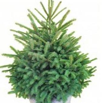 Prekyba augalais / Darius Baltušis / Darbų pavyzdys ID 82945