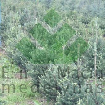 Prekyba augalais / Darius Baltušis / Darbų pavyzdys ID 82949