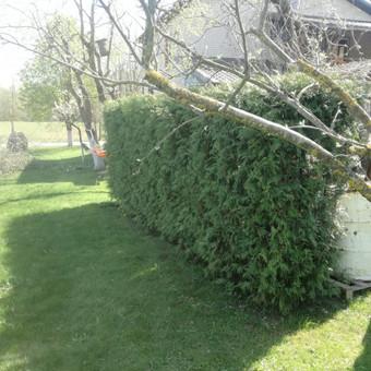 Aplinkos tvarkymas, genėjimas, vejos pjovimas, gyvatvorių ki / Paulius Mikelinskas / Darbų pavyzdys ID 649945