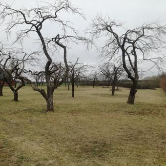 Aplinkos tvarkymas, genėjimas, vejos pjovimas, gyvatvorių ki / Paulius Mikelinskas / Darbų pavyzdys ID 649953