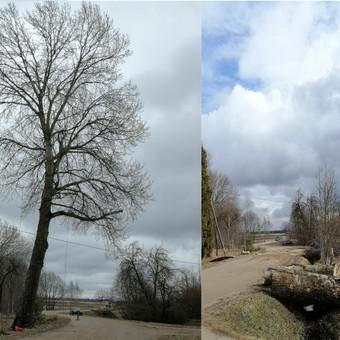 Medkirtys Vilniaus rajone / Raimundas / Darbų pavyzdys ID 674933