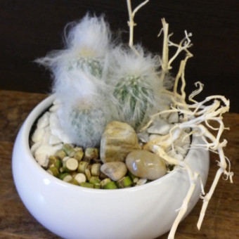 Kaktusas pasodintas vazonėlyje ir dekoras
