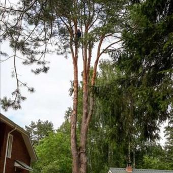 Profesionalus aplinkos darbai, medžių pjovimas,genejimas / Arnas Kazakevičius / Darbų pavyzdys ID 707331