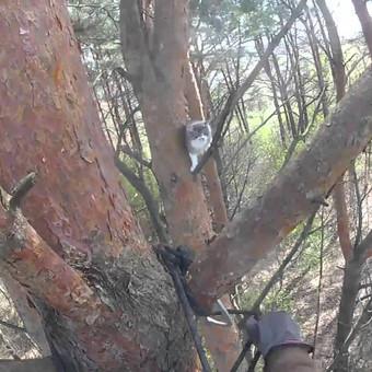 Katės gelbėjimas