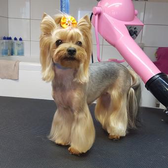 Šunų kirpykla / Renata Grinkienė / Darbų pavyzdys ID 929599