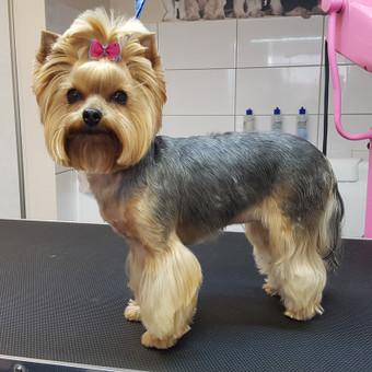 Šunų kirpykla / Renata Grinkienė / Darbų pavyzdys ID 929647