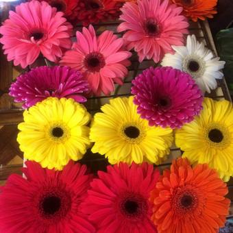 Dalios Gėlės - puokštės, kompozicijos, gėdulo vainikai / Dalia Pranskevičienė / Darbų pavyzdys ID 1001521