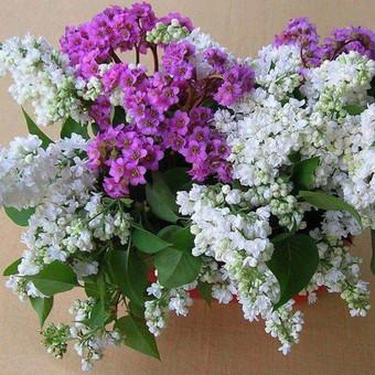 Dalios Gėlės - puokštės, kompozicijos, gėdulo vainikai / Dalia Pranskevičienė / Darbų pavyzdys ID 1001557