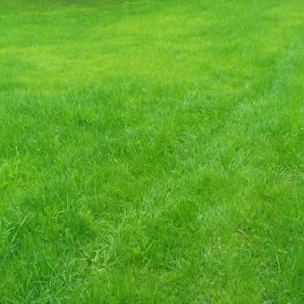 Šlaitų tvirtinimas .vejos įrengimas. / Grasilda / Darbų pavyzdys ID 141635