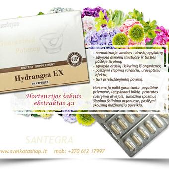 Hydrangea EX (30)  naudojama kaip pagalbinė priemonė, pasireiškiant uždegiminiams procesams šlapimo takuose ir šlapimo pūslėje, sumažina gleivinės uždegimą.