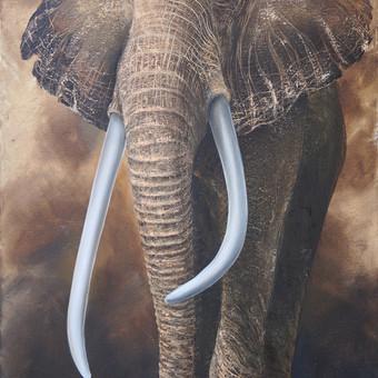 Afrikinis dramblus 60x90, al.drobė.