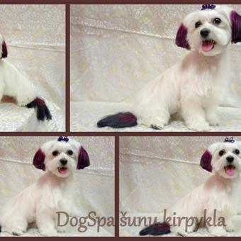 Šunų kirpykla / Dogspa Gyvūnųkirpykla / Darbų pavyzdys ID 192805
