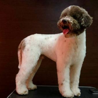 Šunų kirpykla / Dogspa Gyvūnųkirpykla / Darbų pavyzdys ID 192811