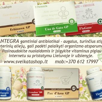 SANTEGRA gamtiniai antibiotikai - augalus, turinčius stiprių eterinių aliejų, gali padėti palaikyti organizmo atsparumą. Įsigykite vitaminus pigiau www.sveikatashop.lt