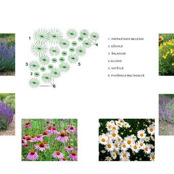 Aplinkos apželdinimo projektavimas / Rolanda / Darbų pavyzdys ID 228173