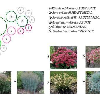 Aplinkos apželdinimo projektavimas / Rolanda / Darbų pavyzdys ID 228177