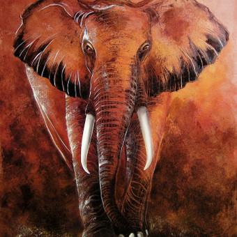 Dykūmų dramblys 50x65, al.drobė.