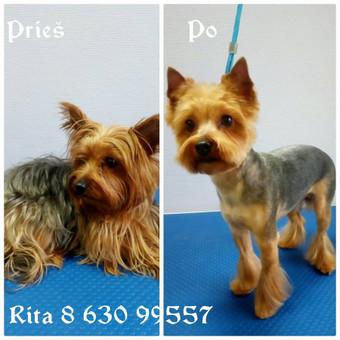 Ritos šuniukų kirpykla / Rita / Darbų pavyzdys ID 240961