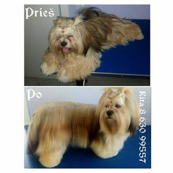 Ritos šuniukų kirpykla / Rita / Darbų pavyzdys ID 245809