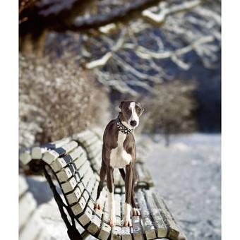 Gyvūnų fotosesija
