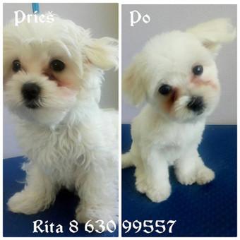 Ritos šuniukų kirpykla / Rita / Darbų pavyzdys ID 263623