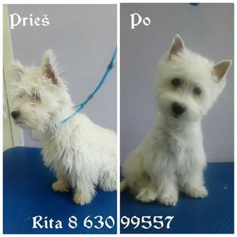 Ritos šuniukų kirpykla / Rita / Darbų pavyzdys ID 263625