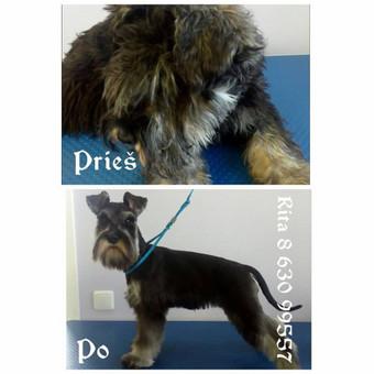Ritos šuniukų kirpykla / Rita / Darbų pavyzdys ID 263627