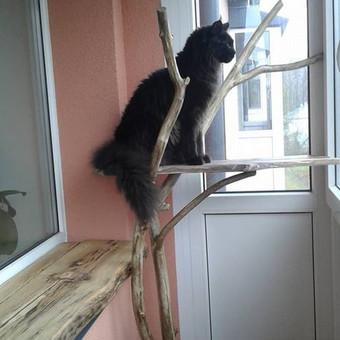 Sostas katinui Carui :).