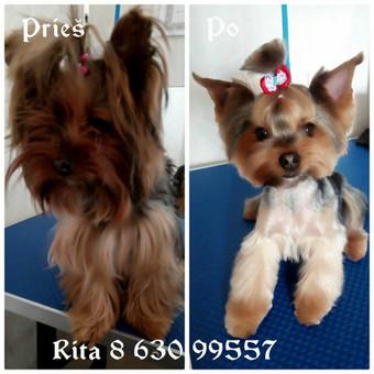 Ritos šuniukų kirpykla / Rita / Darbų pavyzdys ID 361145