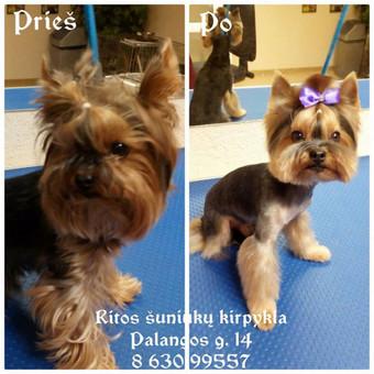 Ritos šuniukų kirpykla / Rita / Darbų pavyzdys ID 361151