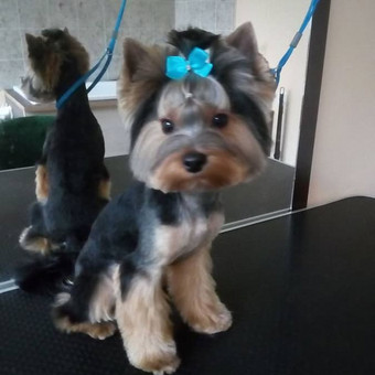 Ritos šuniukų kirpykla / Rita / Darbų pavyzdys ID 361153