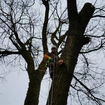 """Pavojingų medžių pjovimas, medžių pjovimas / MB """"Justin's group"""" / Darbų pavyzdys ID 373283"""