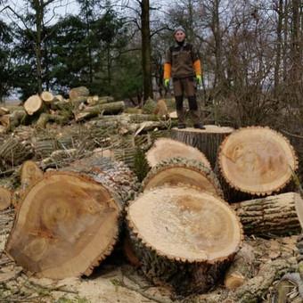 """Pavojingų medžių pjovimas, medžių pjovimas / MB """"Justin's group"""" / Darbų pavyzdys ID 373285"""
